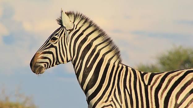 Hermanus A Alberts - Zebra Sky Beauty