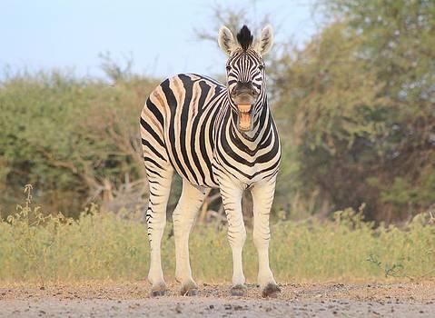 Hermanus A Alberts - Zebra Smile