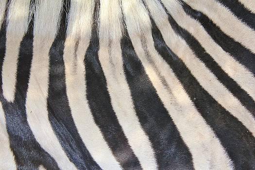 Hermanus A Alberts - Zebra Stripes