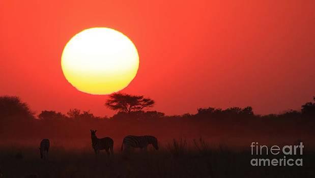 Hermanus A Alberts - Zebra Sunset