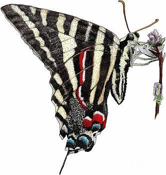 Roger Hall - Zebra Swallowtail Butterfly