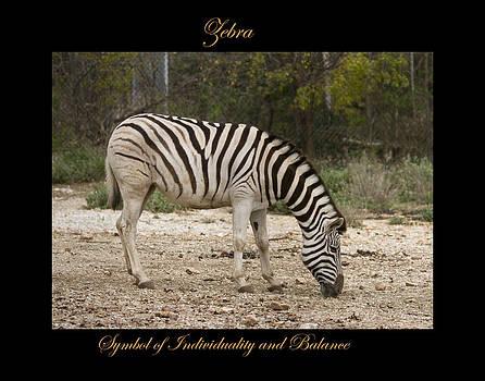 Zebra Symbol of by Marty Maynard