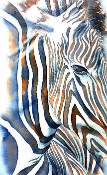 Zebra by Thomas Habermann