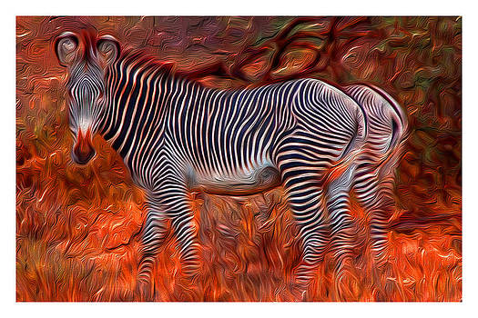Zebra trapped in forest fire by Ck Gandhi