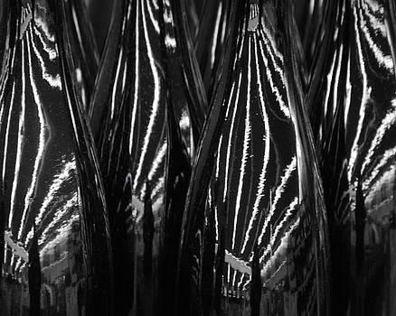 Zebra Wine by Lisa Lieberman