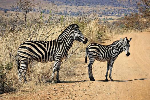Zebras Crossing by Kim Andelkovic