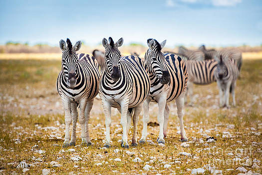 Katka Pruskova - Zebras IV