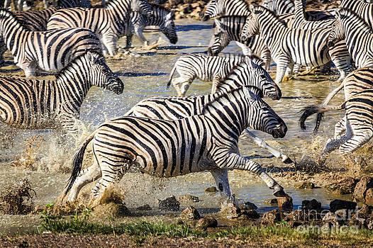 Katka Pruskova - Zebras