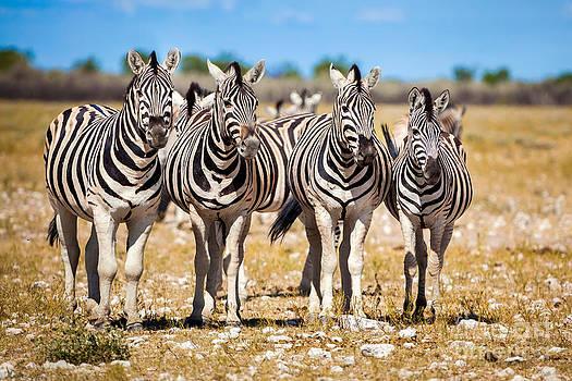 Katka Pruskova - Zebras V