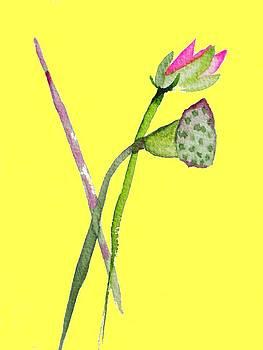 Zen Pink Lotus on yellow by Sacha Grossel