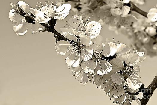 Zen by Sandi Mikuse