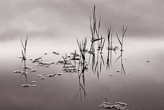Zen Waters by Lorenzo Cassina
