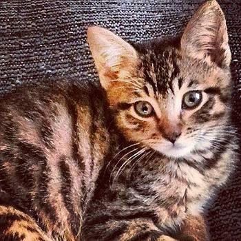 #zeus Is #precious #ilovehim #meow by Amy Marie La Faille