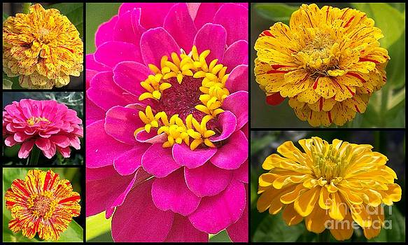 Zinnia Collage by Eunice Miller