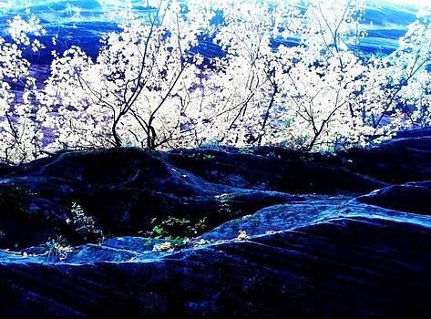 Zion Blue by Natalya Karavay