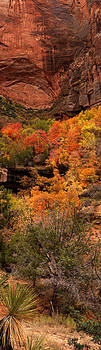 Zion Fall Colors by David  Forster