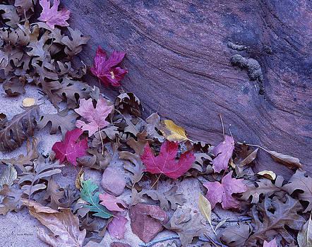 Scott Wheeler - Zion Leaves