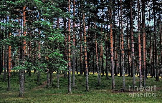 Zlatibor pines by Marija Djedovic