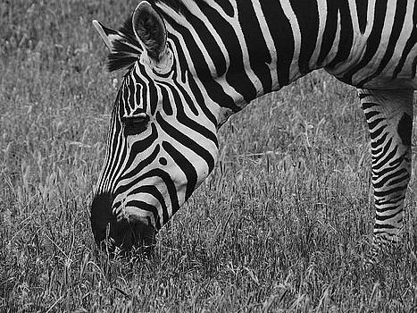 Black and White by Mamie Thornbrue