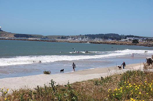 California Beach by Carolyn Donnell