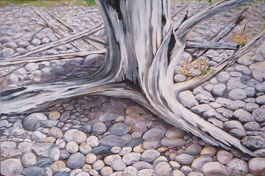 Driftwood  by Anne Marie Spears