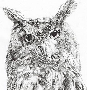 ' European Eagle Owl' by Sue  Miles