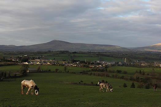 Joseph Doyle -  Grazing pasture in  sun light.