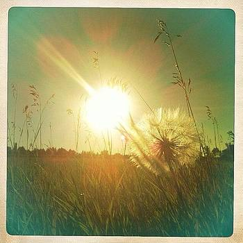 ☀ Make A Wish #dandelion #nature #sun by Ange Exile DuParadis