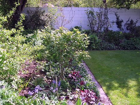 Rachael Shaw -  Millstream Gardens 22