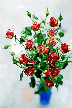 Roses by Ekaterina Samorukova