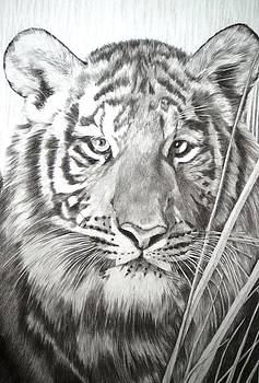 ' Save China's Tigers' by Sue  Miles