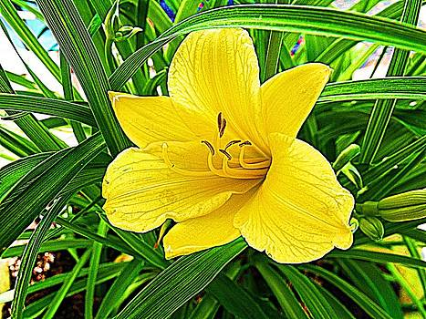 Yellow Lily  by Dave Dresser