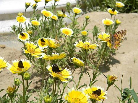 05122012 19 Butterflyopolis by Scott Bishop