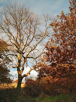 Adel Wood Autumn by Steve Watson