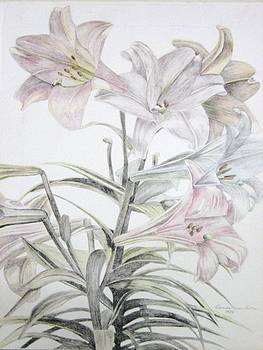 Astral lilies by D Marie LaMar