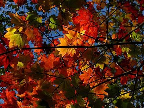 Autumn Essence by Boyd Miller