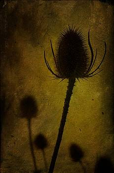Autumn Lament by Tim Kahane