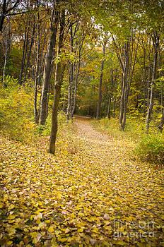 Autumn by Presiyan Petrov