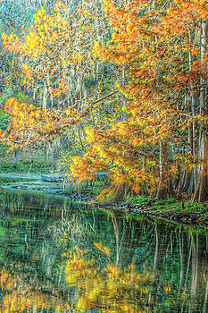 Ronald T Williams - Autumn Reflections