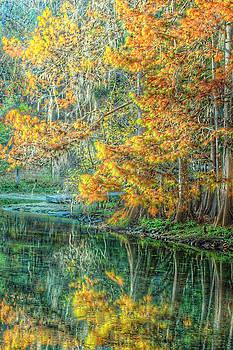 Ronald T Williams - Autumn Reflections