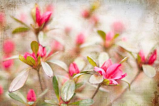 Azalea by Cheryl McCain