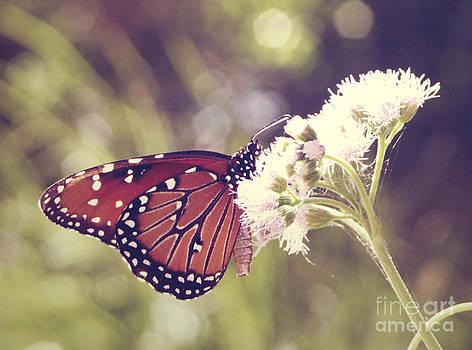 Balancing Monarch by Melina Geil