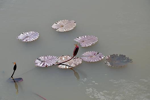 Beautiful Nature by Kamel Rekouane