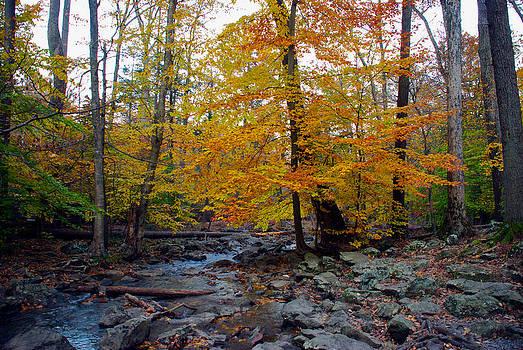 Mark Dodd - Big Hunting Creek down stream from Cunningham Falls