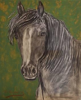 Black horse by Jose Luis Villagran Ortiz
