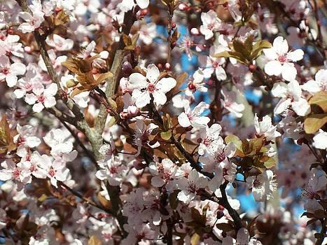 Blooming Tree by Jonathan Barnes