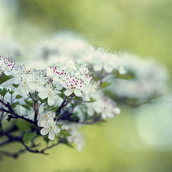 Blossom by Joel Olives