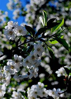 Blossom by Marija Djedovic