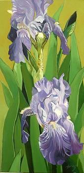 Alfred Ng - blue iris