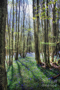 Bluebell Woods by Lee-Anne Rafferty-Evans